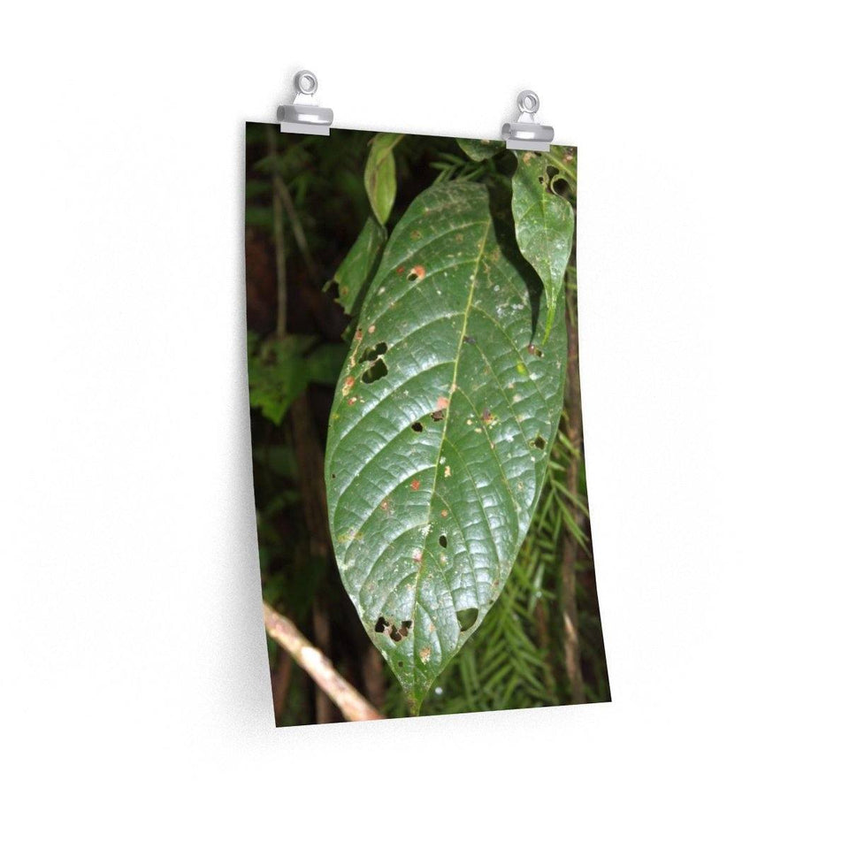 Posters - Large tropical leaf in El Verde - the lower part of the forest - El Yunque PR Poster Printify