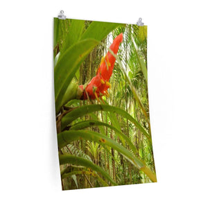 Posters - The Bromeliad - the AIR plant home of the frogs and coqui - El Yunque rainforest PR Poster Printify