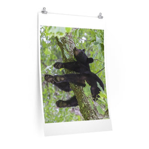 Premium Matte vertical posters - Happy bear in branch in Smoky Mountain National Park in Summer in Mountain National Park (SMNP) USA - Yunque Store