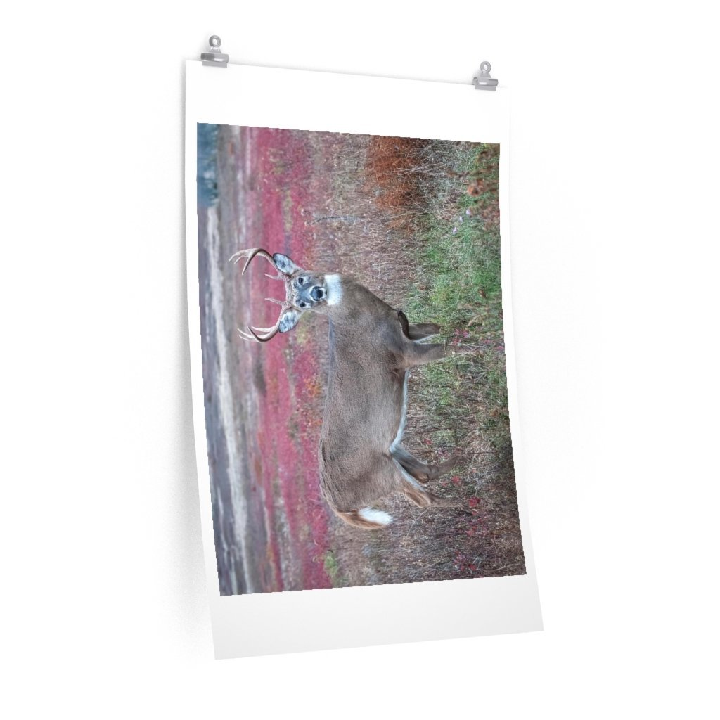 Premium Matte vertical posters - Large whitetail buck in a colorful fall meadow in Smoky Mountain National Park in Summer in Mountain National Park (SMNP) USA - Yunque Store
