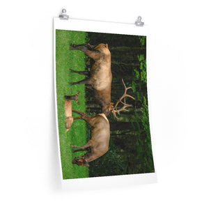 Premium Matte vertical posters - Lovely Deer family in Smoky Mountain National Park in Summer in Mountain National Park (SMNP) USA - Yunque Store