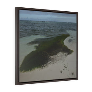 SEA HAIRS - US MADE - Square Framed Premium Gallery Wrap Canvas - Remote & Pristine Mona Island PIER with couple - algae in beach - near Puerto Rico - Yunque Store