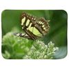 Sherpa Blankets (Infant Sizes) - Butterfly in flower AwsomeRainForest@Home