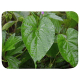 Sherpa Blankets (Infant Sizes) - Foliage and vines s in Rio Sabana park - El Yunque rain forest PR AwsomeRainForest@Home