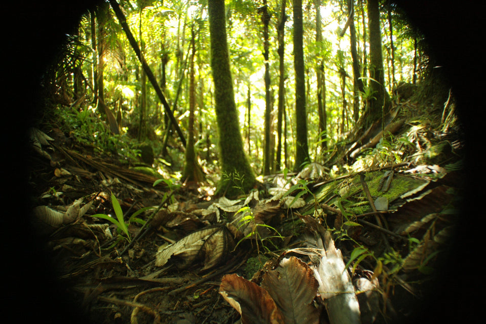 Slideshow 1-Hour 500 Hi-resolution images of El Yunque Rainforest PR - before Hurricane Maria DIGITAL_DOWNLOAD AwesomeRainForest@Home