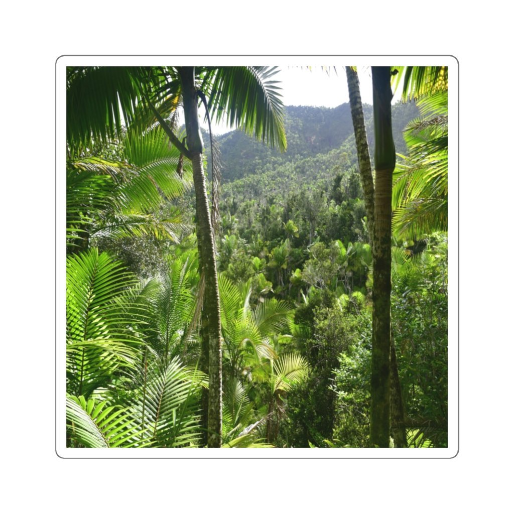 Square Stickers - Bring home the most remote, rarely seen, regions of the rainforest in Puerto Rico - Yunque Store