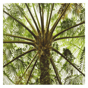 Tablecloths - The ancient Fern Palm - El Yunque rainforest Puerto Rico - Yunque Store