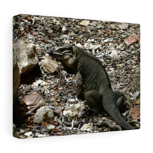 The Amazing native Iguana of Mona Island - Puerto Rico - the Galapagos of the Caribbean - in Pajaros beach Canvas Printify