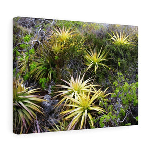 Upper near coast desert of Mona Island - Puerto Rico - the Galapagos of the Caribbean - in Pajaros beach Canvas Printify