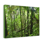 US Made - Canvas Gallery Wraps - Bring home the most remote, rarely seen, regions of the rainforest - El Toro Wilderness in Puerto Rico - Yunque Store