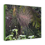 US Made - Canvas Gallery Wraps - Sierra Palm and seeds - the cloud forest - on PR 143 the top road in PR - Toro Negro rainforest at 4,000 feet altitude - Puerto Rico - Yunque Store