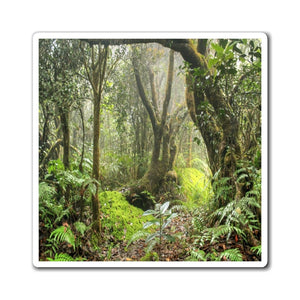 US Made - Magnets - for a Nature@Home experience - awesome Paradise Path in 14km Tradewinds Trail - El Yunque - Puerto Rico - Yunque Store
