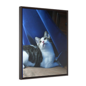 Vertical Framed Premium Gallery Wrap Canvas - US print - The home cat mini Dante dazzled by the magic of the winds, curtains and sunlight - Isabela Puerto Rico - Yunque Store