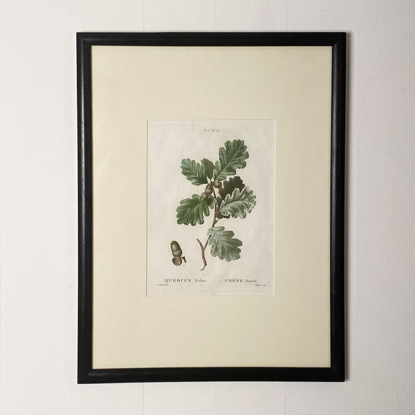 Oak Leaf Botanical. France Circa 19th Century