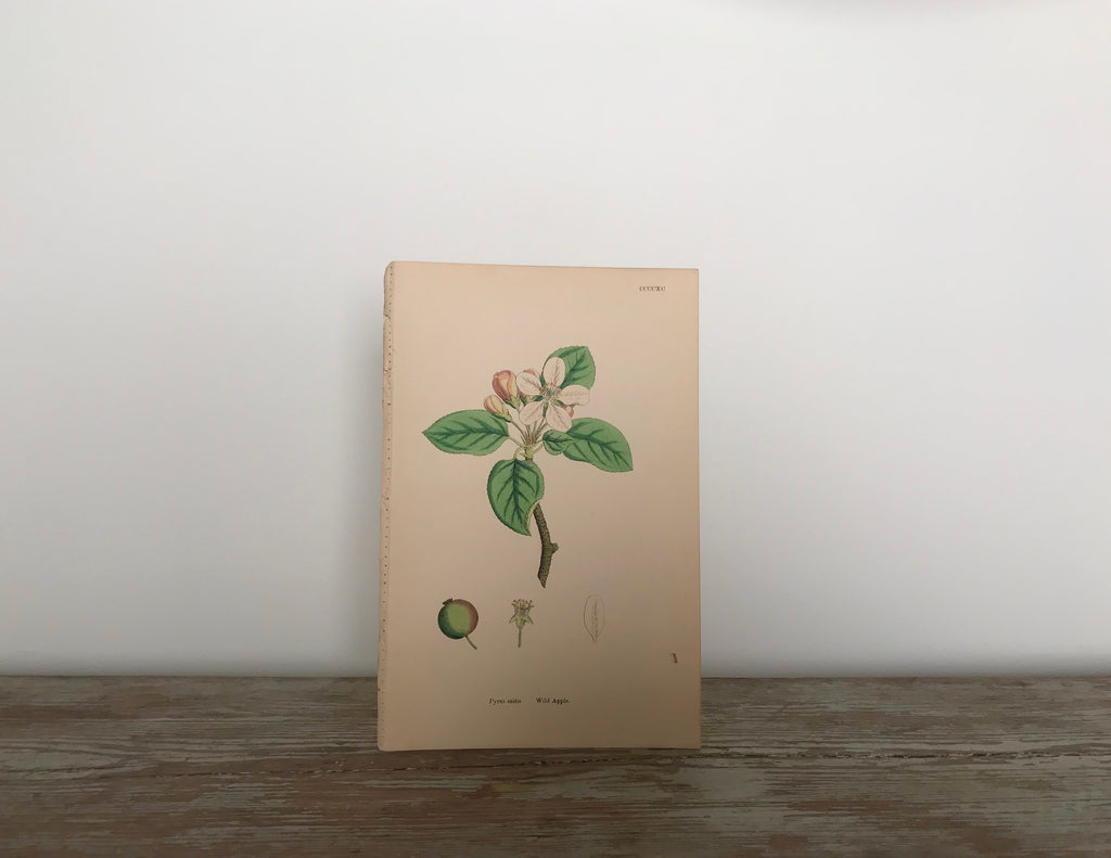 Botanical hand-painted prints from Victorian era