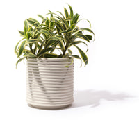 Oblique Planter