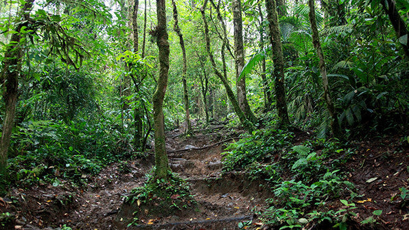 Costa Rica Forests Hike