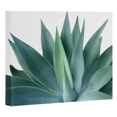 Gale Switzer Agave Blanco Art Canvas
