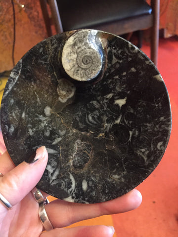 Ammonite dish