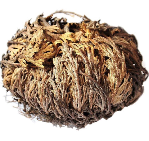 Rose of Jericho Flower