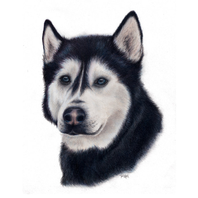 """Siberian Husky"" - A4 Original Artwork"