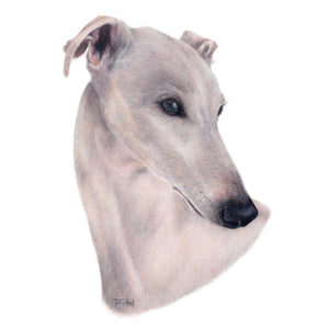 """Whippet"" - A4 Original Artwork"