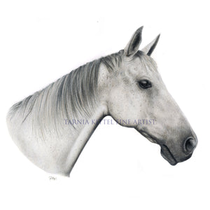 """Grey Thoroughbred"" - Giclée print"