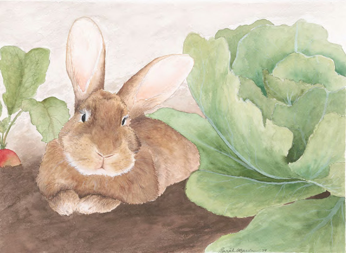 Walt the Flemish Giant Rabbit Print