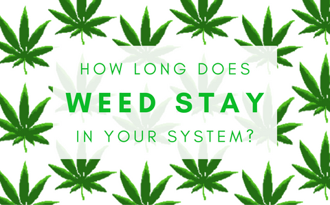 How long does weed stay in your system, green on white background illustration