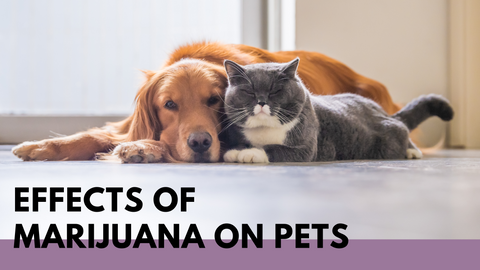 dogs and cats, pets together effect on marijuana, pet consumed cannabis effects and solutions