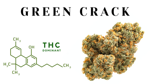 Green crack weed strain on white background