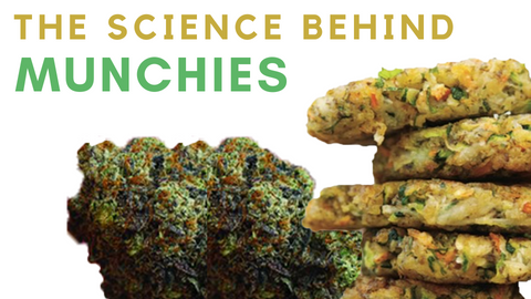 The science behind munchies illustration on white background