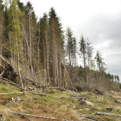Saving Loch Arkaig Forest