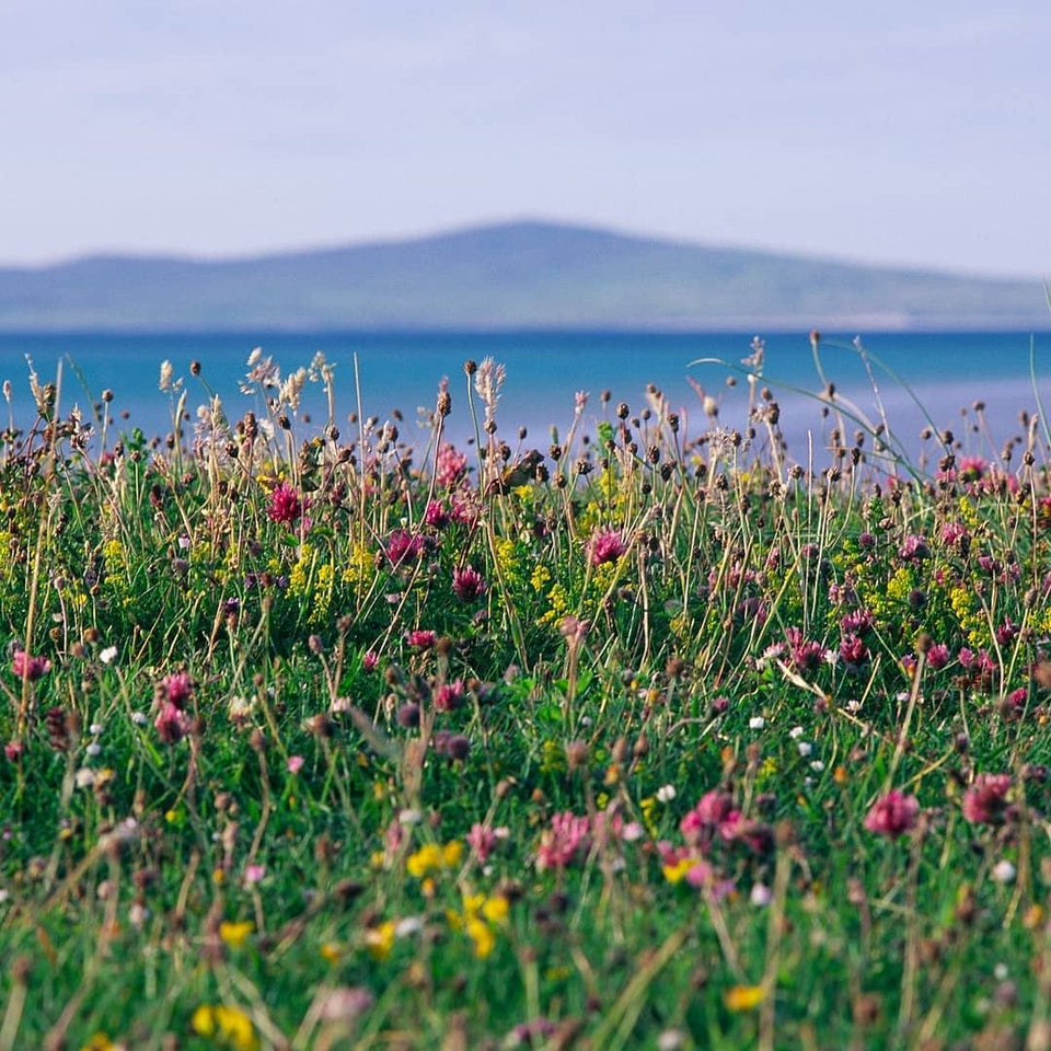 Machair Flowers