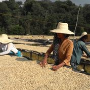 Load image into Gallery viewer, ETHIOPIA - DUROMINA **93 Rating from Coffee Review** SOLD OUT UNTIL NEXT YEAR