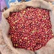ETHIOPIA - DUROMINA **93 Rating from Coffee Review**