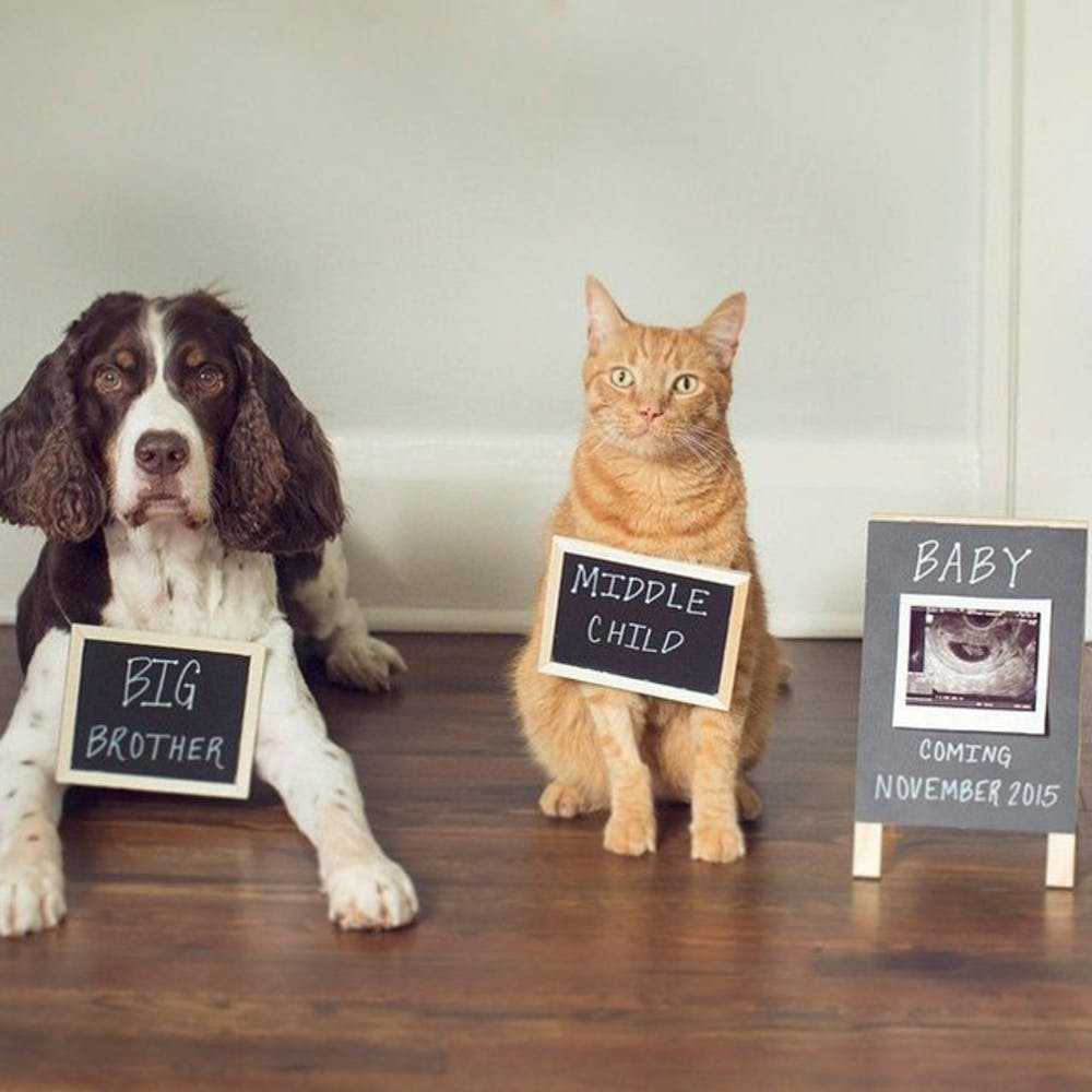 The Purrfect Pregnancy Announcement Ideas