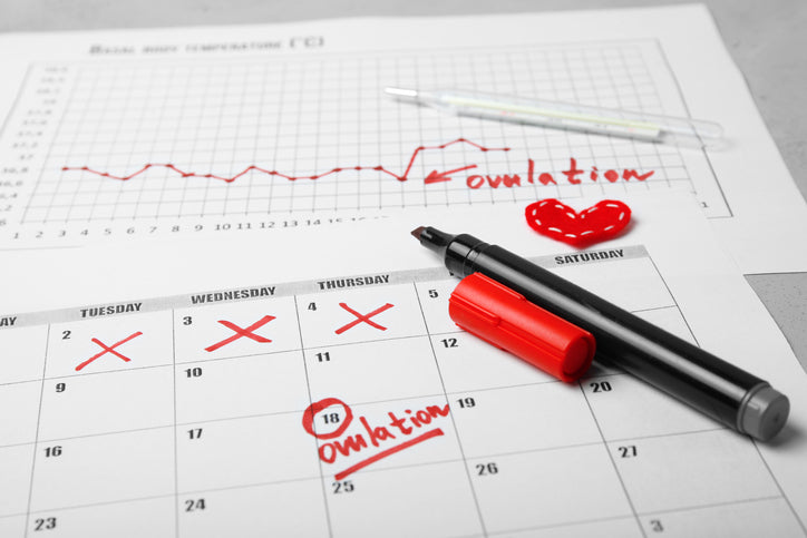 Figure Out When You Ovulate