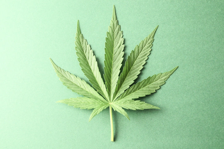 Marijuana in Pregnancy: BREAKING NEWS.