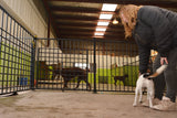 Pet Boarding vs Pet Sitting: Which Should You Choose?
