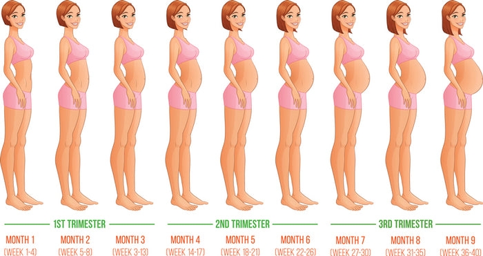 How a Baby Grows in the Second Trimester