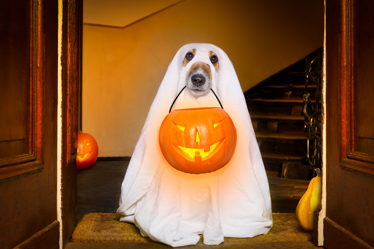 5 Creative Halloween Costumes for your Furbaby