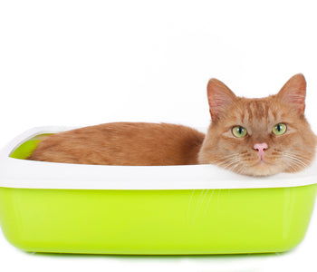 How to Deal with Litter Box Stink