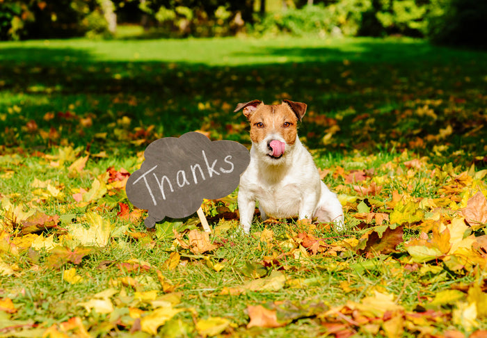 7 Reasons to Give Thanks for Your Dog