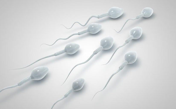 How to Increase Sperm Quality