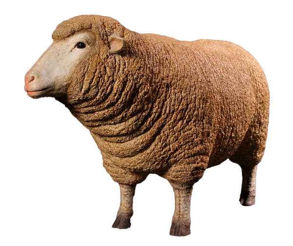 Merino Ewe Life Size Statue - LM Treasures Life Size Statues & Prop Rental