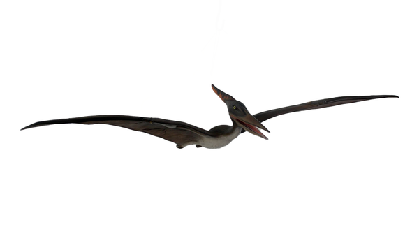 Baby Pteranodon Dinosaur Life Size Statue - LM Treasures Life Size Statues & Prop Rental