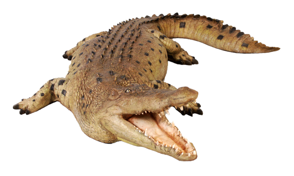 Crocodile Mouth Open Life Size Statue - LM Treasures Life Size Statues & Prop Rental