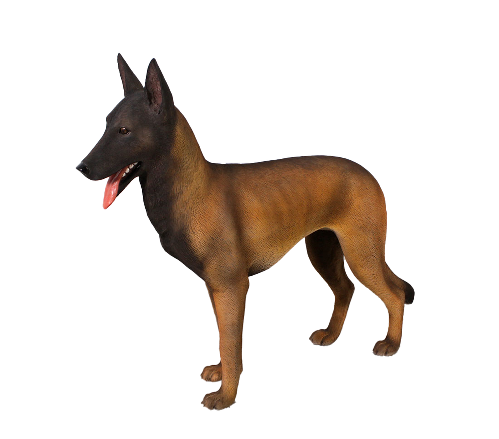 Belgian Malinois Life Size Statue - LM Treasures Life Size Statues & Prop Rental