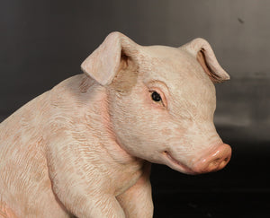 New Born Pig Sitting Life Size Statue - LM Treasures